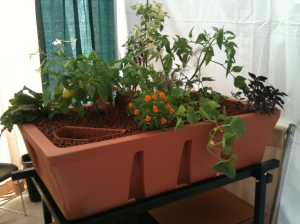AquaBundance grow bed planted