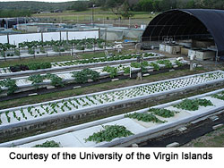 University of the Virgin Islands Aquaponics system